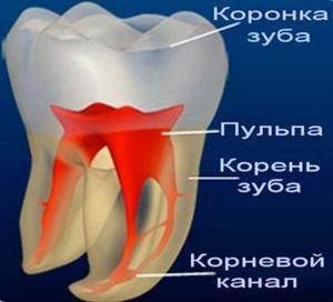 Анатомия корневых каналов